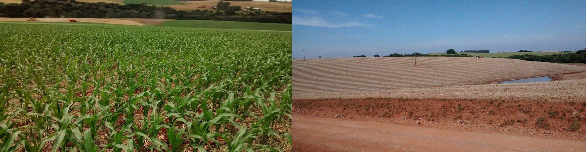 Lavoro Dametto – Plantação de milho. Tapejara, RS | Plantação de soja. Ciríaco, RS |fotos de Mateus Dametto
