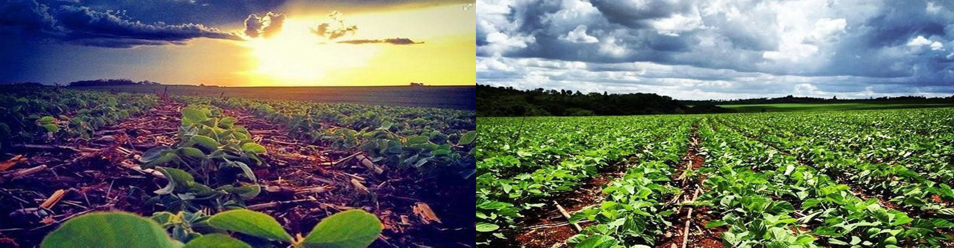 Fazenda de soja, Capitan Bado, Paraguay |foto de Karina Dametto |Estância Nova Esperança, Capitan Bado, Paraguay |foto de Marco Aurélio Dametto