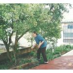 Fermina Zanatta Mazaro em seu cotidiano nos últimos anos de vida. Fermina cuidava do jardim, amava a natureza, os pássaros e animais.