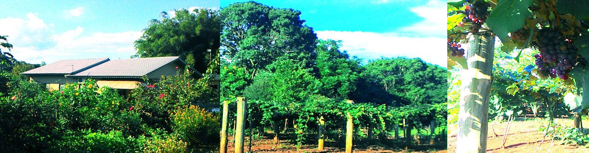 Propriedade de Roque Luiz Dametto, Linha Ouro Verde, Medianeira, Pr |fotos de Teresinha Alves Dametto